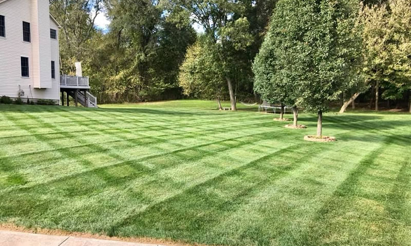 Photo Showing Lawn Mowed By Natural Image Property Services